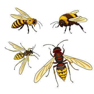 reconnaitre l'abeille